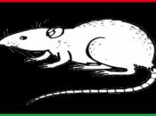 "REVOLUTION ARABE. Libye: Mouammar Kadhafi islamique ""Charia"""