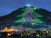 plus grand sapin Noël mesure mètres haut