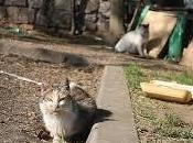 Chats abandonnés dans rues Montréal