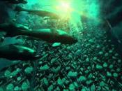 exondations huîtres l'étang Thau