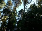 Ceux vont forêt