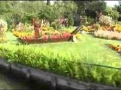 Dans hortillonnages d'Amiens Aquarelle
