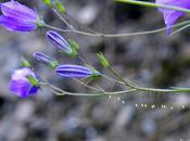 printemps approche