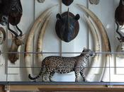 musée chasse c'est sexy