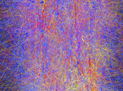 étonnants pouvoir transformation cerveau