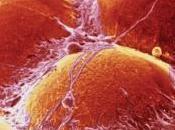 SÉDENTARITÉ: paresse s'empare aussi cellules Biophysical Journal