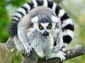 Madagascar: édition salon international tourisme