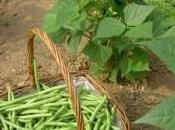 Salade jardinier emmental