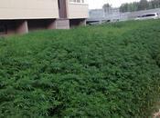 employés municipaux plantent cannabis erreur (Russie)