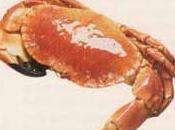 Crabe thon feuillets pastis anis étoilé, cœurs palmier radis roses, émulsion pistou