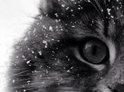 cutencats: Heart