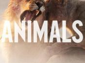 Ecoutez titre inédit Maroon Animals.