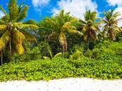 Découverte l'île Barbade