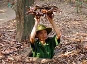 visites historiques faire Vietnam