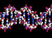 Joël Rosnay: épigénétique, elle régule l'activité gènes