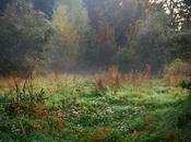 week-end tous, vous avez moment invite aller admirer couleurs l'automne s'installe doucement #nature #naturelovers #landscape