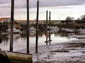 Coquillages crustacés, référence L'Houmeau. valeur sûre port Plomb