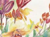 Narcisses tulipes l'aquarelle