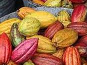 Françoise vous présente Chercheuse* Cacao, passionnée humaniste