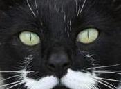 Movember Moustache pour tous moustaches mèmes.