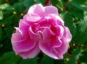 Voir rose pour photo mois