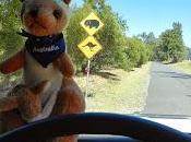 Premier kangourou plus encore...)