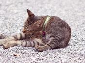 Thaïlande chats