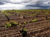 vins Rueda fraîcheur convivialité