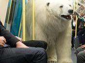 ours polaire égaré dans rues Londres