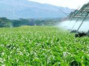 Agriculture: opérateurs algériens mission d'affaires Etats-Unis février prochain
