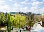 Londres piscine sans chlore