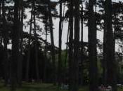 Bois Boulogne