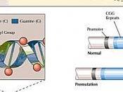 FRAGILE: Eviter tout symptôme chez petits porteurs Neuron