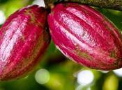 Touton S.A. lance usine transformation cacao Ghana