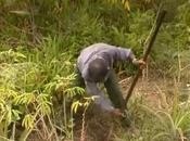 L'OR VERT MADAGASCAR pouvoir plantes (PHYTOTHERAPIE) GUERISSEURS