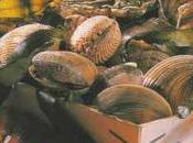 Huîtres moules laitue mer, épinards cru, julienne pimientos