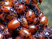 Sans insectes, notre monde s'écroulerait