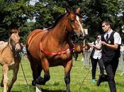 Cheval breton concours départemental Carhaix couleurs photos)