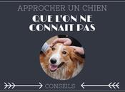 Conseil pour approcher chien