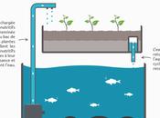 L'aquaponie, système culture d'avenir