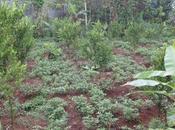 Balade dans rizières Langgahan chez Made Ocong