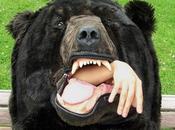 peluche ours brun comme couchage, pour hiberner tout l'hiver