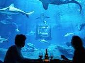 chambre Airbnb dans l'Aquarium Paris milieu requins