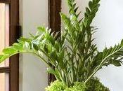 plantes vraiment très résistantes