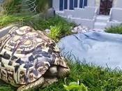 fabrique enclos Jurassic Park pour tortue