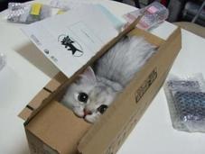 angoisses d'une mère chat avant déménagement