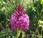 orchidées campagnes