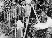 avril 1957, convaincu Royaume-Uni l'existence d'arbres spaghettis?