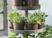 idées pour planter herbes aromatiques intérieur
