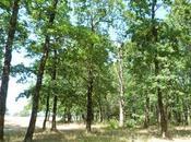 Andernos: citée balnéaire bassin d'Arcachon, entre petit bois villas ième siècle!